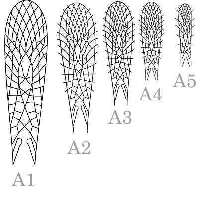J:son&Co 58305 Заготовки для имитаций крылышек Realistic Wing Material for Stoneflies (фото, вид 7)