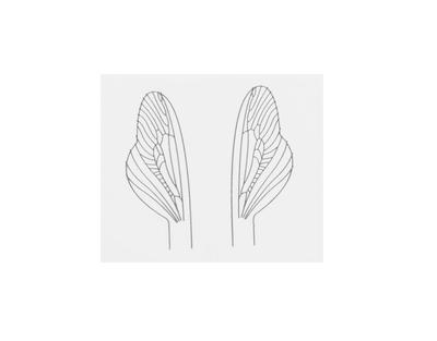 J:son&Co 58311 Заготовки для имитаций крылышек Realistic Wing Material For Caddis Spent / Stonefly Spent (фото, вид 4)