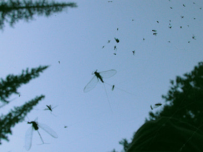 Artflies 11198 Сухая мушка Burnt Wing Spinner Olive (фото, вид 4)