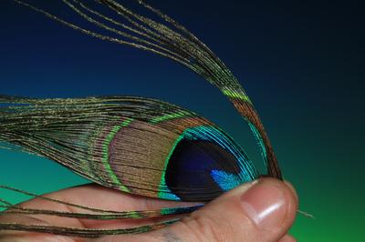 SFT-studio 53248 Перо павлина Peacock Eyes 50cm (фото, вид 1)