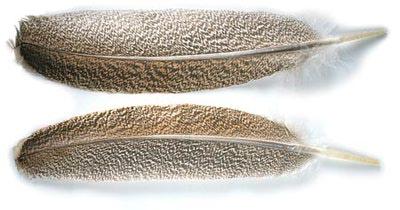 Veniard 53257 Маховые перья индюка Wing Quill (фото, вид 1)