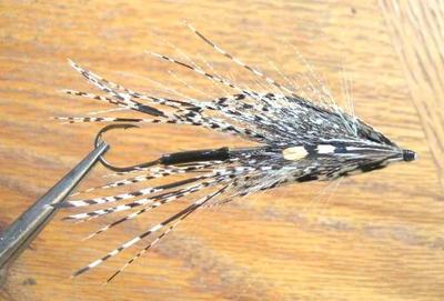 Veniard 53132 Хвост алмазного фазана Amherst Phesant Complete Tail (фото, Veniard Amherst Phesant Complete Tail )