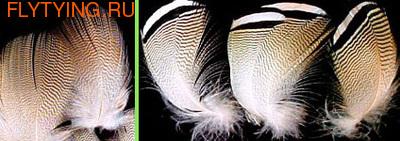 WAPSI 53090 Утки древесной перья WOODDUCK