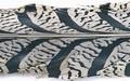 Veniard 53139 Отрезок хвостового пера алмазного фазана Amherst Centre Tail Piece