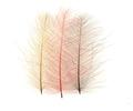 Marc Petitjean™ 53142 Перья утки CDC Feathers