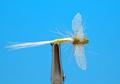 Artflies 11202 Сухая мушка Burnt Wing Spinner Light Cahill