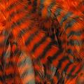 WHITING™ 53256 Крупные перья из седла петуха Schlappen