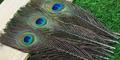 SFT-studio 53279 Перо павлина Peacock Eyes 25-30cm