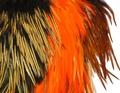 WAPSI 53008 Седло петуха INDIAN COCK SADDLE PATCH