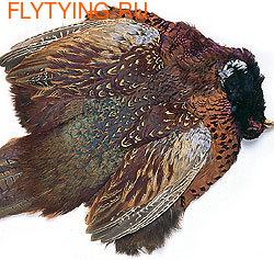 53095 Фазана охотничьего самца шкура целая без хвоста RINGNECK PHEASANT COCK WHOLE SKIN, NO TAIL
