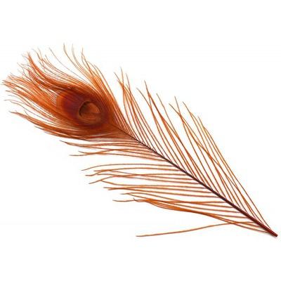 Spirit River 53121 Перо павлина Iridescent Dyed Peacock (фото, вид 4)