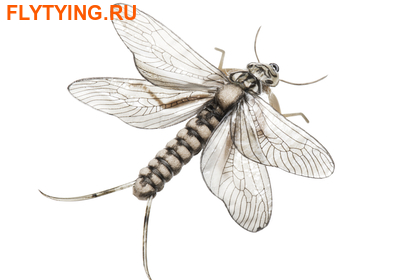 J:son&Co 58311 Заготовки для имитаций крылышек Realistic Wing Material For Caddis Spent / Stonefly Spent (фото)