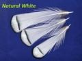 SFT-studio 53013 Фазана алмазного шейные перья LADY AMHERST PHEASANT TIPPETS