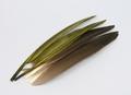 WAPSI 53097 Гусиные маховые перья GOOSE QUILLS