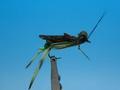 Pacific Fly Group 11127 Сухая мушка BMAR Hopper Olive