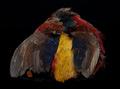 A.Jensen 53224 Перо золотого фазана Golden Pheasant Body Skin