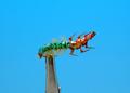 Artflies 14391 Мушка нимфа ручейника Realistic Hydropsyche Larva