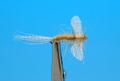 Artflies 11200 Сухая мушка Burnt Wing Spinner Sulfur