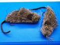SFT-studio 11238 Имитация мышки Deer Mouse Big