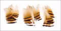 53061 Перья с шеи золотого фазана Assorted Tippets Golden Phesant