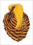 53066 Скальп с хохолком Golden Pheasant Complete Head
