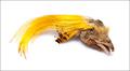 53067 Хохолок с головы золотого фазана Golden Pheasant Crest