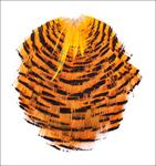53078 Секция с перьями золотого фазана Golden Pheasant Tippet Section
