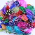 53010 Перо цесарки Guinea Feathers