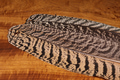 53150 Маховые перья павлина Mottled Peacock WIng Quills
