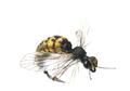 58310 Заготовки для имитаций крылышек Realistic Wing Material For Caddis Pupa / Wasp / Ant / Hopper
