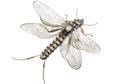 58311 Заготовки для имитаций крылышек Realistic Wing Material For Caddis Spent / Stonefly Spent