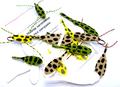 58322 Набор пенок Frogs Body Set