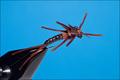 14330 Мушка нимфа Kaufman's Stonefly Black Brown