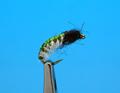 14393 Мушка нимфа ручейника Vinyl Back Caddis Larva Green