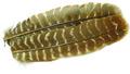 53257 Маховые перья индюка Wing Quill