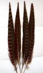 53282 Перья фазана Ringneck Pheasant Side Tail