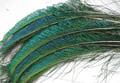 53283 Мечевидные перья павлина Peacock Swords