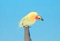 16205 Лососевая мушка Bead Nuke Egg Light Roe