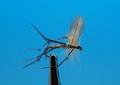 11241 Сухая мушка Crane Fly Adult