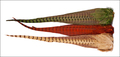 53058 Хвост охотничьего фазана Ringneck Pheasant Complete Tails
